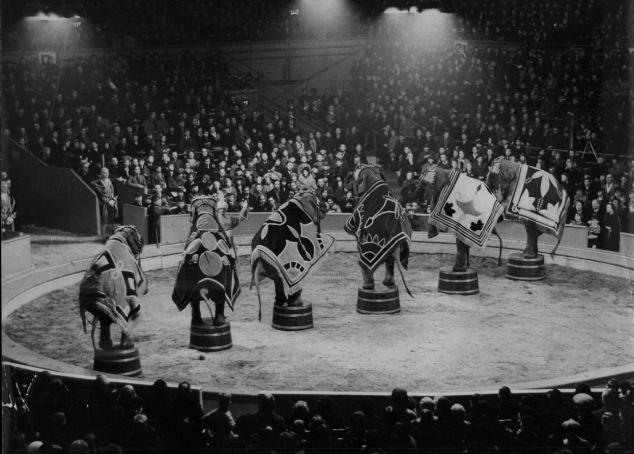 Erwin, a cidade que enforcou um elefante - Circo