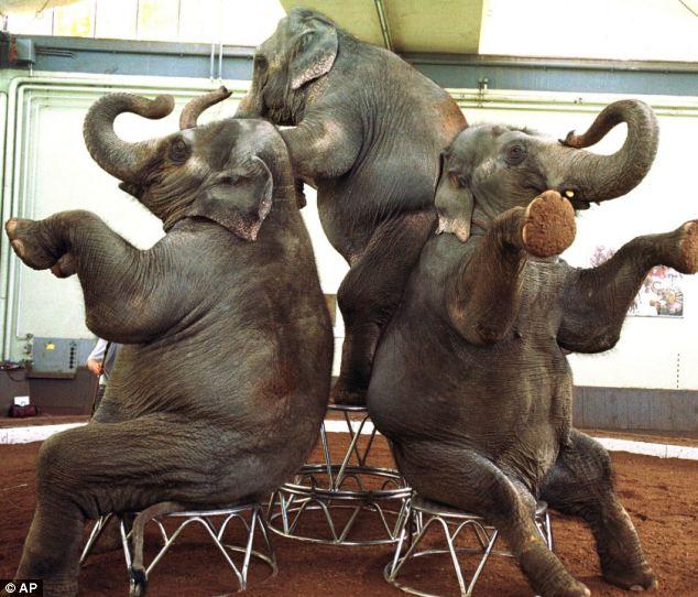 Erwin, a cidade que enforcou um elefante - Elefantes domados