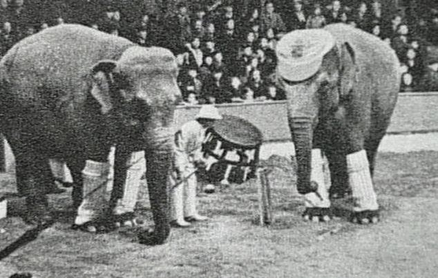 Erwin, a cidade que enforcou um elefante - Elefantes