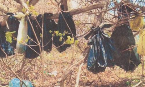 25 Gatos Encontrados Enforcados em Nova Iorque - Foto