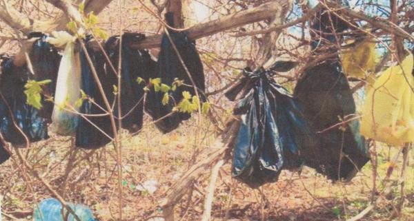 25 Gatos Encontrados Enforcados em Nova Iorque - Gatos