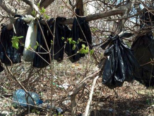 25 Gatos Encontrados Enforcados em Nova Iorque - Sacos pretos