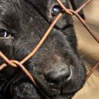 Crueldade contra animais
