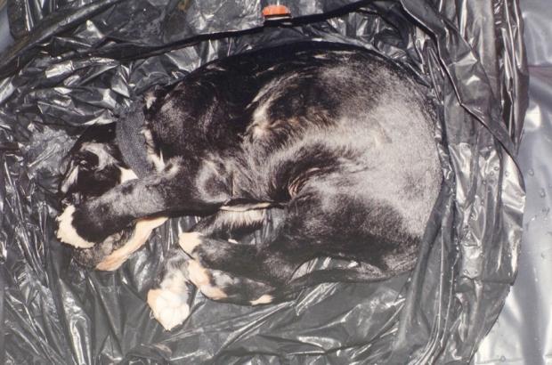Na foto: Um filhote de cachorro morto está entre as evidências apresentadas durante o julgamento de Luka Rocco Magnotta. Créditos: Dave Sidaway. The Gazette.
