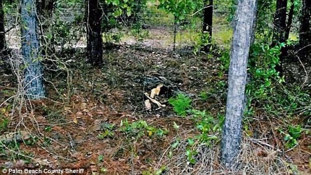 O assassino descartou o corpo da mulher num bosque ao longo da Interstate-10, perto de Pensacola.