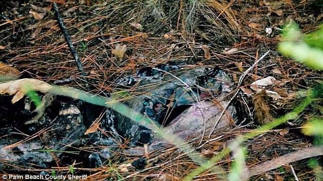 Horrorosa descoberta: Os restos mortais decompostos da mulher foram encontrados há mais de 21 anos atrás no Condado de Okaloosa, Flórida, meses após sua morte.