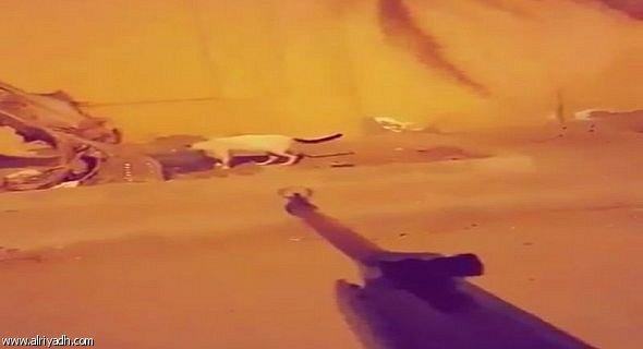 Matador de gatos filmou vários dos crimes.