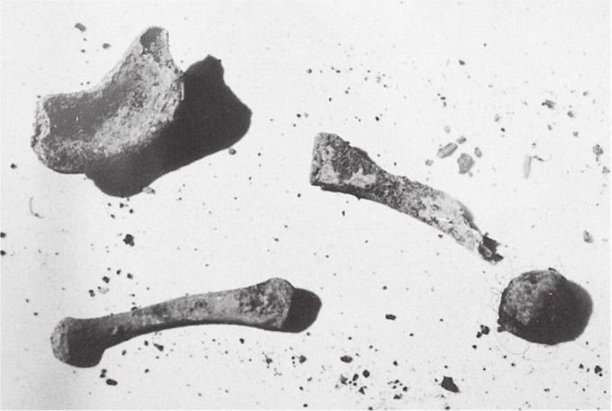 Imagem exibida no tribunal mostra fragmentos de ossos encontrados na propriedade de Lake. No total, 45 quilos de fragmentos de ossos foram retirados do local. Foto: Die for Me: The Terrifying True Story of the Charles Ng & Leonard Lake Torture Murders.